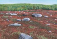 Blueberry Barrens, Maine