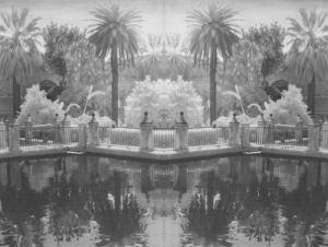 Pool with Palm Trees, Spain (greyscale)